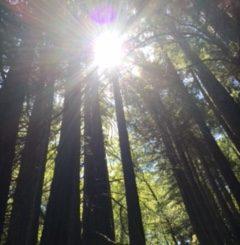 Horns in the Redwoods