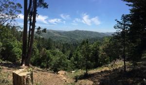 Redwoods-22