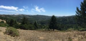 Redwoods-23