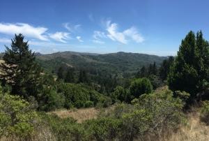 Redwoods-24
