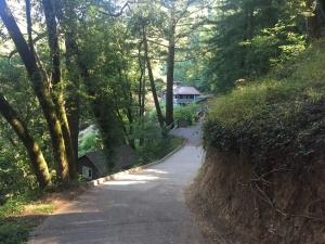 Redwoods-26