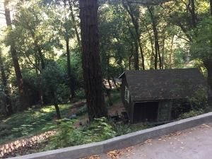Redwoods-27